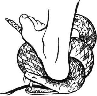 snake_heel